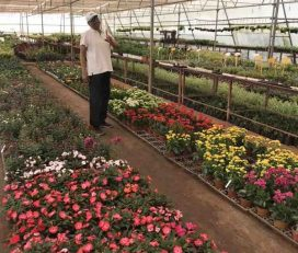 Green House Nursery