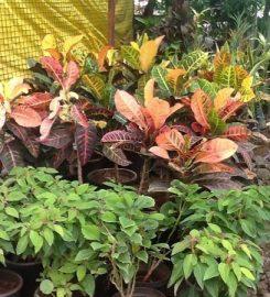 Sai Rose Nursery And Garden Developer