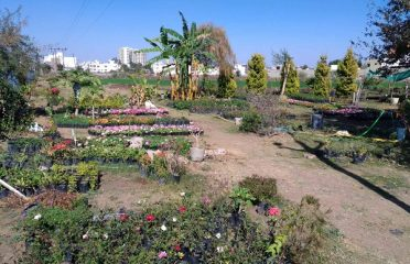 Lakeview Nursery