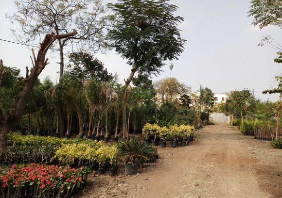 Motiya Plant Nursery India Gardening