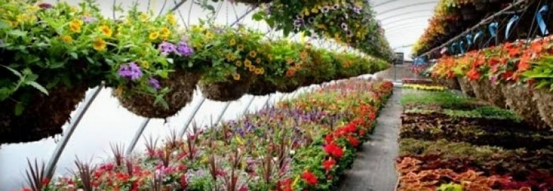 Xolives Backyard – Plant Nursery