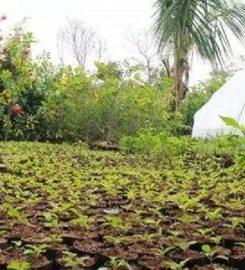 Soundarya Nursery