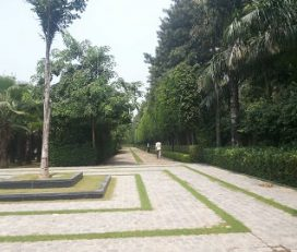 D N Pal Landscape
