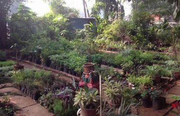 Sairaj Nursery
