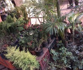 Garden Developers And Nursery