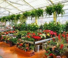 Krishna Plant Nursery
