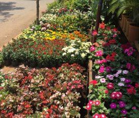 Sri Maruthi Garden and Nursery