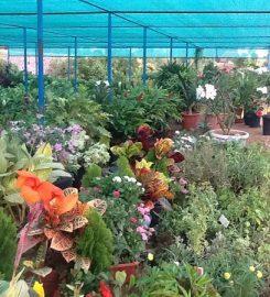 Karuna Nursery Garden
