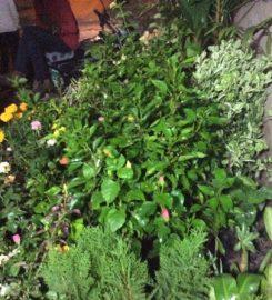 Garden Developers And Nursery