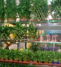 Priya Nursery