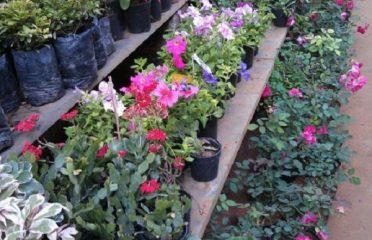 Shakambari Garden