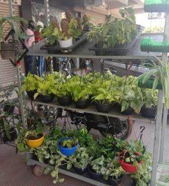 The Garden Shop