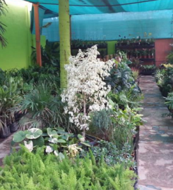 Kaivalya Garden Center