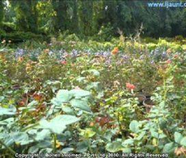 Lalbagh Plant Nursery