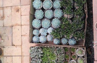 Urban garden by Joginder Nursery
