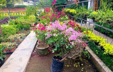 Rajdhani Nursery