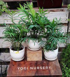 Yogi Nursery