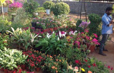 Isha Plant Nursery Madhavaram