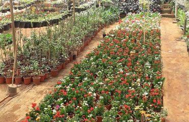 Karthik Farm & Nursery
