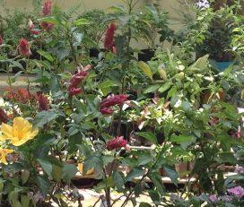 GVIR Plant Nursery