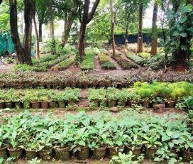 Home A Garden