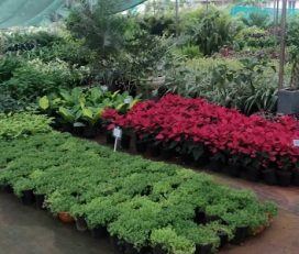 His Creation Plant Nursery