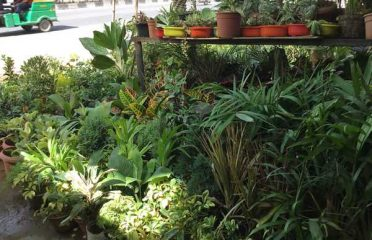 Ozone Plant Nursery