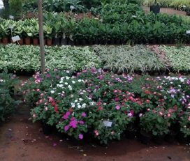 East West Nursery
