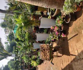 Suman Nursery