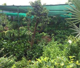 Home Gardens Nursery