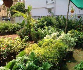 Mayuri Nursery Garden
