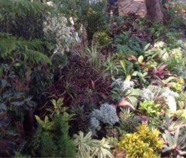4Sneha Global Garden