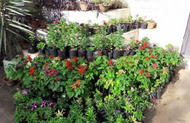 Pushpawali Plant Nursery