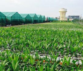 Ganga Nursery