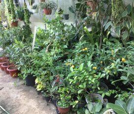 Gajanan Nursery