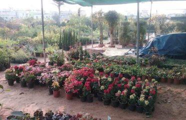 Ramya Nursery Garden