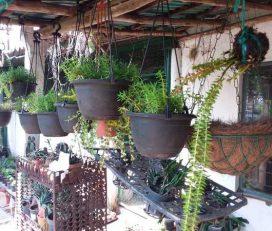 Roja Nursery
