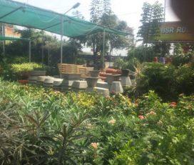 BSR Rose Nursery