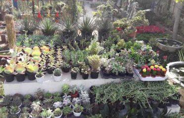 Khejri Nursery