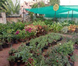 Sri Sairam Nursery