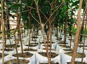 Tall Tree Nursery