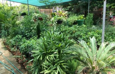 Vinayak Nursery