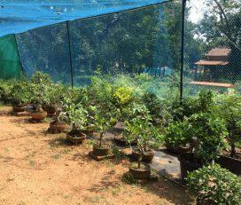 Bhide Plants