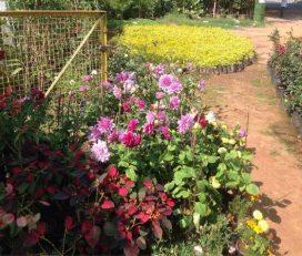 Sri Balaji Rose Nursery
