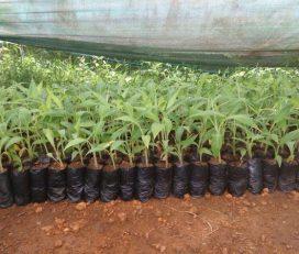 Friends Plant Nursery