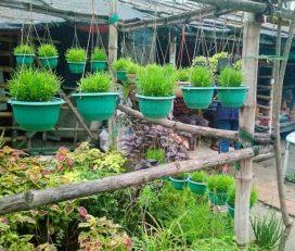 New Dutta Nursery