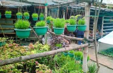 New Dutta Nursery