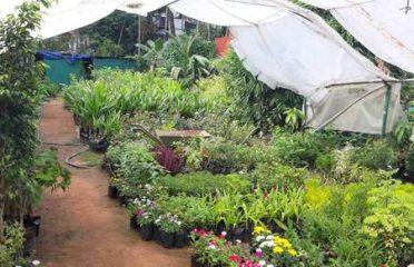Thaikkattil Gardens