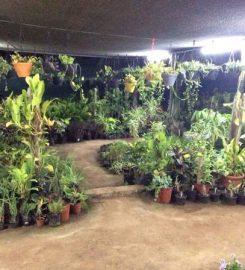 Standard Plant Shoppe