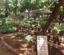Thakur Nursery
